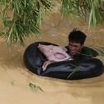 Fotó: Traktorbelsővel úszik a disznó, de ez most nem vicces