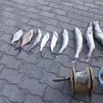 Kis hal: orvhalászt fogott a balatoni vízirendőrség