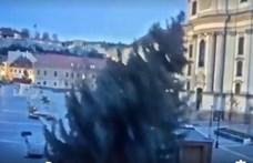 Gyönyörű karácsonyfát állított Eger – hajnalban a szél ledöntötte (videó)