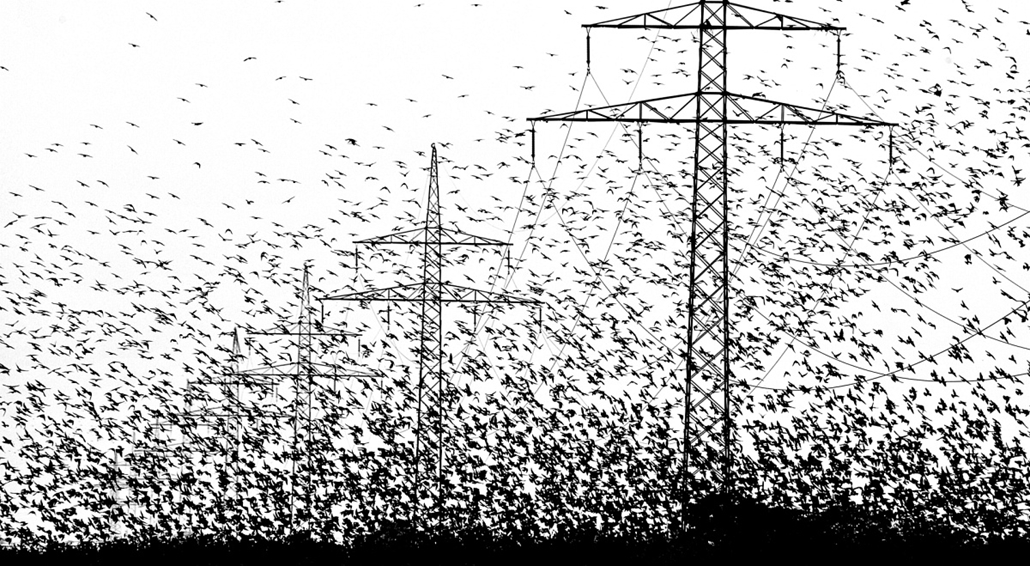 NE HASZNÁLD! - canon év természetfotósa, 2015 természetfotó, XII. Fekete-fehér természetfotók, EDF DÉMÁSZ különdíja - Hommage a Hitchcock