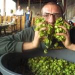 A sör fűszere - komló