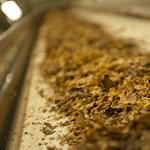 Súlyos számok: percenként 10 ember hal meg a dohányzás miatt