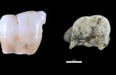 Találtak egy 800 000 éves emberi fogat, sikerült genetikai mintát venni belőle