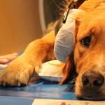 Magyar kutatók kísérlete: mi történik a kutyában, amikor hozzászól valaki?