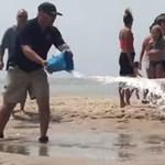 Videó: Strandolók mentették meg egy partra vetődött cápa életét
