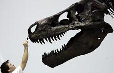 A T-rex olyan lassan sétált, hogy egy ember is lehagyhatta volna