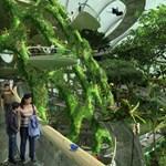 Napelemes fák, luxus függőkertek Szingapúrban