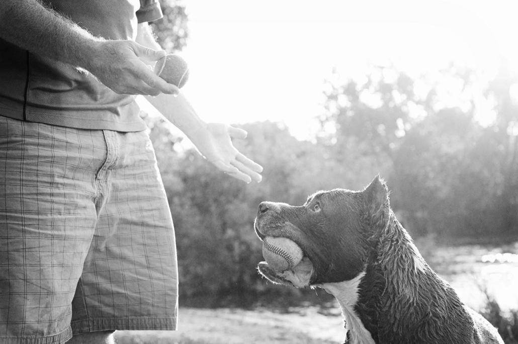 NE használd, nagyításhoz kértük!!! - kutyák altatás előtt - ronin-62b