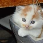 Ha pénteken már semmi kedve dolgozni, nézzen itt imádnivaló macskás jeleneteket
