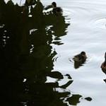 Kiszáradt szikes tó telt meg újra vízzel Derecskénél