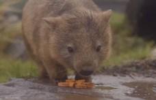Videó: így örülnek az ausztrál állatok az esőnek