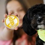 Egy magyar kislány mellett állt munkába Gofree, Európa első gluténjelző kutyája