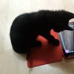 Fogjon egy macskát és egy iPadet – ez jön ki belőle