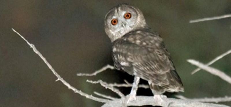 Új madájfajt fedeztek fel – a hangja tűnt fel a kutatóknak