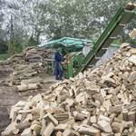 Durva károkat okoztak a fakereskedő bűnözők