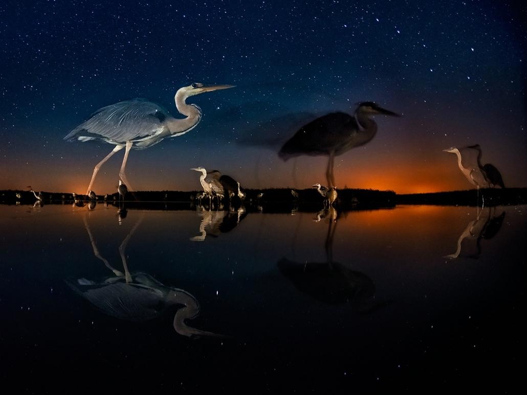 NE_! - XI. Napnyugtától napkeltéig - 1. díj - Nagy Göncöl  - Az Év Természetfotója 2014, nagyítás