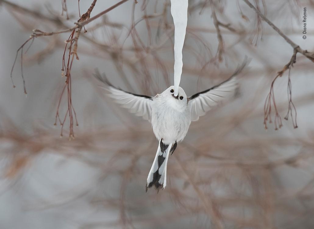 NE HASZNÁLD!!  Wildlife Photographer of the Year 2019