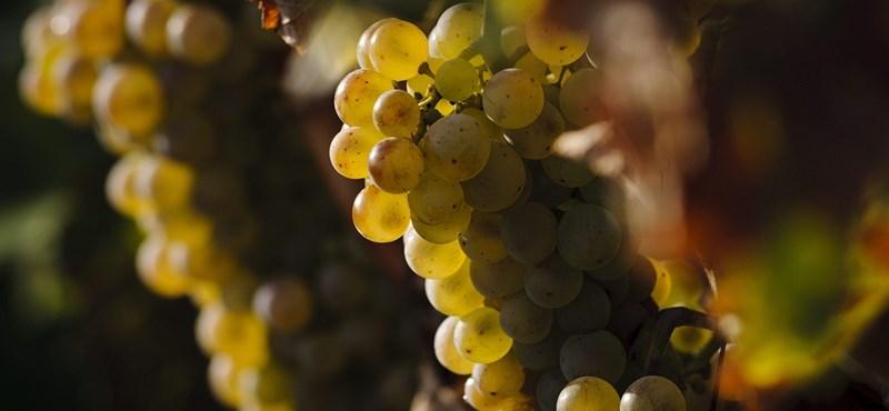 2 milliárdot csalt el az ismert borász