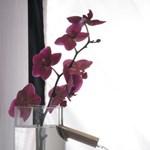 Olasz fürdőtrend! Vázával kombinált üveg csaptelep (fotókkal)