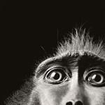 Az evolúció az arcunkra van írva?