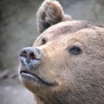 Meglátta az árnyékát Balu, az Állatkert medvéje
