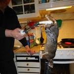 Macskaméretű patkányok terrorizálják a briteket