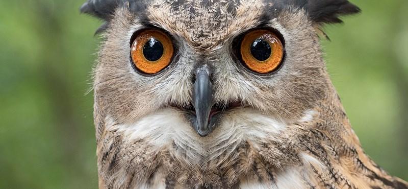 Los científicos están haciendo sonar las alarmas y las aves de rapiña están muriendo en todo el mundo