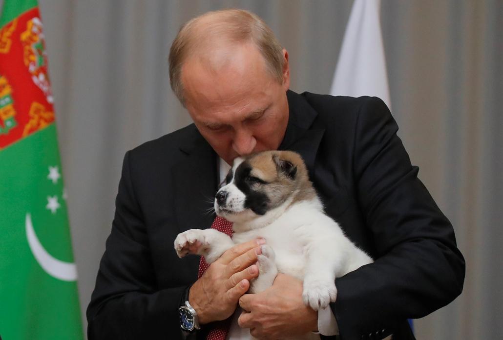best of 2017 Vlagyimir Putyin orosz elnök kezében a Gurbanguly Berdimukhammedov türkmén elnöktől ajándékba kapott Alabai türkmén juhászkutyakölyökkel Szocsiban