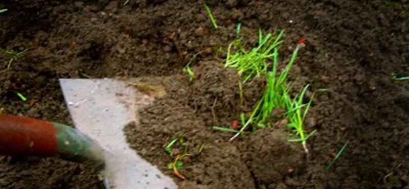 Hétvégi munka a kertben - Ezért ne hanyagolja el az ásást és a talajforgatást