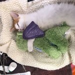 A cicák is szeretik a plüssbarátokat