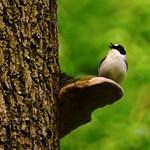 Magyar kutatók: Nem véletlenszerű a madarak éneke, hanem különös erőfitogtatás