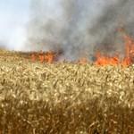 Negyven hektár szántóföld égett Barcs határában