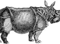 Egy vágányt akartak lerakni, 120 000 éves orrszarvú maradványaira bukkantak a szomszédban