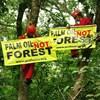 Indonéziának annyira nagy üzlet a pálmaolaj, hogy betiltja a mentes termékeket