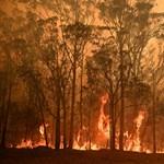 Sikerült megzabolázni egy Sydney melletti gigantikus tüzet