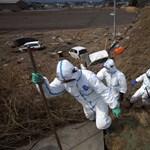 A határérték 7400-szorosával sugárzik a fukusimai hal