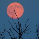 Emberi hamvakat visz a Holdra egy cég, elsőként kaptak engedélyt
