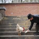 Romániában is felbukkant a madárinfluenza egyik variánsa