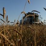 Egymásnak ugrasztotta és bajba sodorta a földjeit bérlő gazdákat az állam