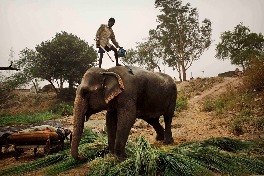 India: egy kontinensnyi ország arcai – Nagyítás fotógaléria