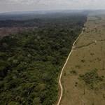 Felfoghatatlan, mennyi trópusi erdő tűnt el egy év alatt, ez pedig komoly baj