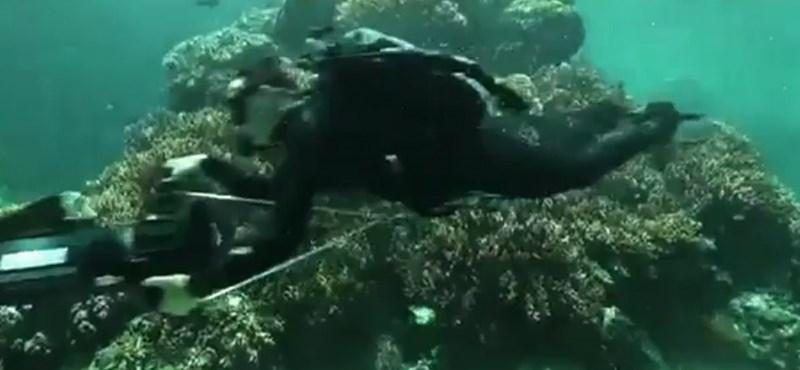 Napi videó – a Google és a Nagy Korallzátony