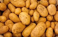Az emberek köszönték a krumplit, és leszavaztak az ellenzékre