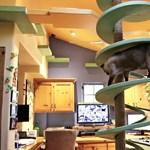 Egy férfi megépítette a macskák földi paradicsomát – videó