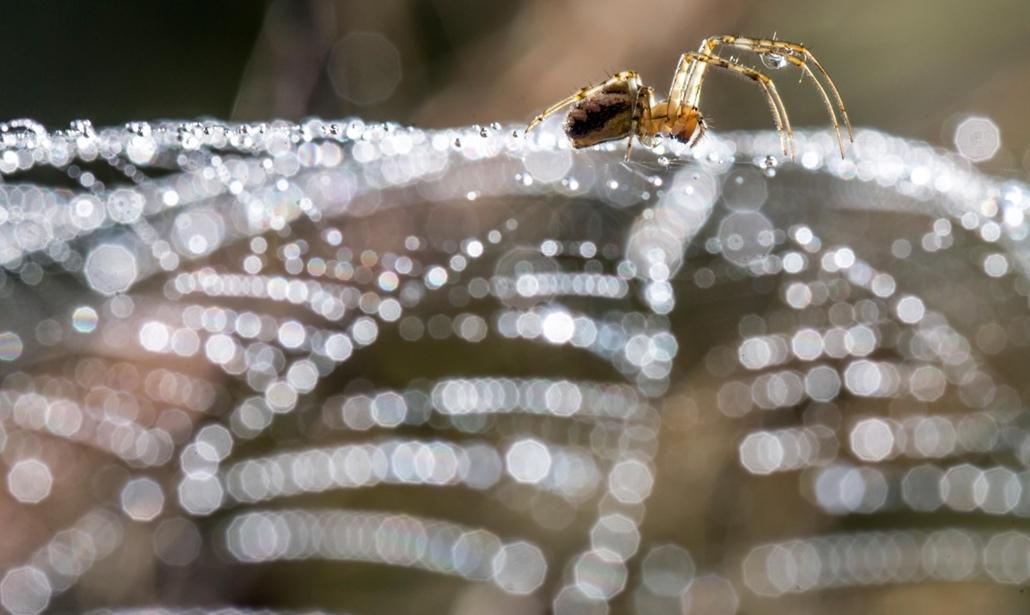 afp. pók, pókháló, nagyítás - Döringsdorf, Németország, 2014.10.03. A spider sits in its web after a rain shower in Doeringsdorf, eastern Germany on October 3, 2014.