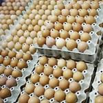 Amerikában a boltok hűtőjében van a tojás, de miért?