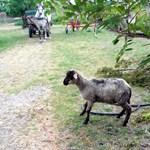 Fotók: Íme a bárány és a mélységes mély kút, amibe beleesett