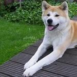 Egy kutyamenhelyt is letarolt a vihar Mátészalkán