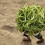 A nap képe: különös szerzet járkál egy indiai piacon