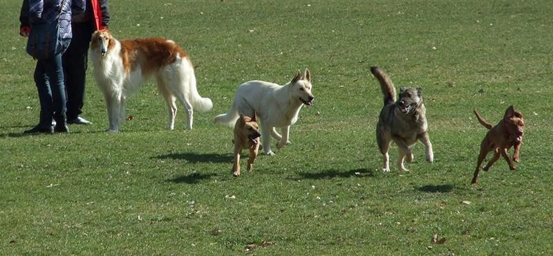 """""""Sétáltatod a kutyát, erre hoz egy nyúzott nyúlfejet vagy levágott lábat"""""""